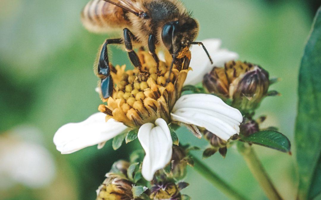Titoli da quarantena: 4 libri sul mondo delle api